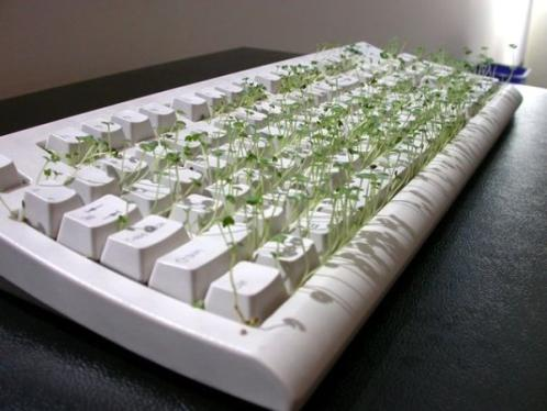 4 funny chia pet keyboard 10 ways to clean your dirty keyboard