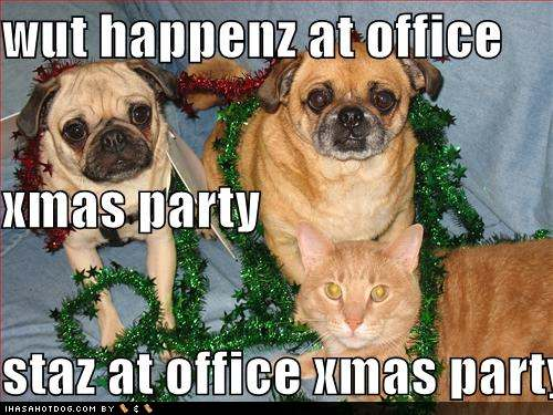 funny dog pictures this is what happens at the office party 5 Reasons why working is hard this time of year