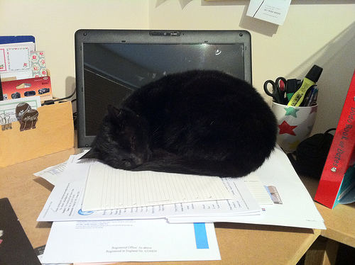 kitty asleep on desk best of office weekend roundup 59