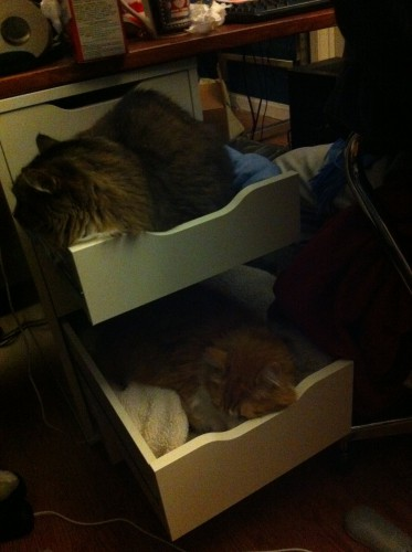 cats desk drawers 373x500 best of office weekend roundup 72