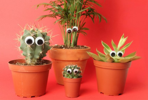 friendly cactuses 500x338 best of office weekend roundup 76