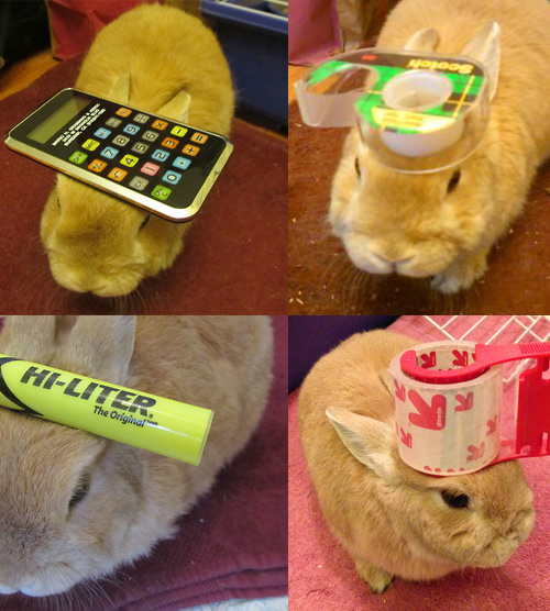 stuff on my rabbit This Rabbit Wears Office Supplies