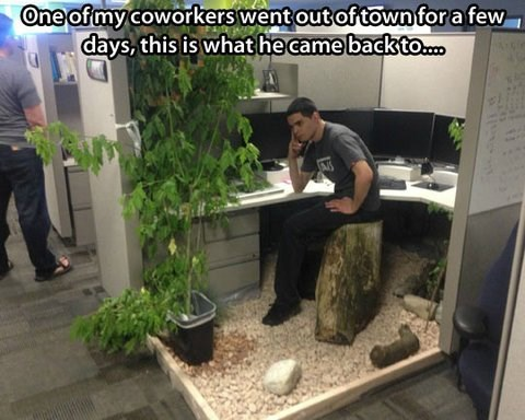 cubicle terrarium Best of Office Weekend Roundup 154