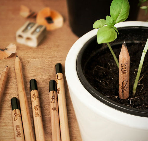 pencil sprout grows vegetable flowers herbs 07 Best of Office Weekly Roundup 188