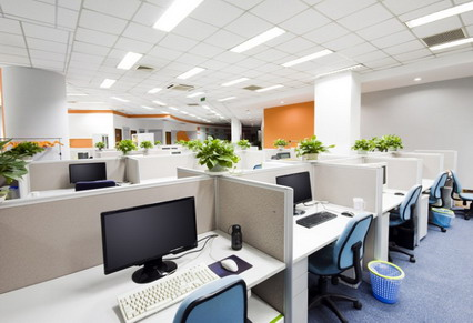 White Decorating And Indoor Plants In Modern Office