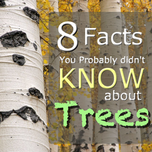8 Facts you probably didnt know about trees