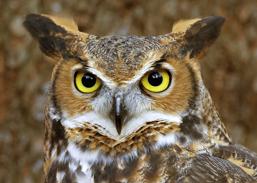 Because you give a hoot, that's why.