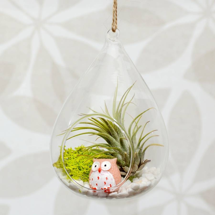 original_hanging-glass-water-drop-vase-air-plant-terrarium