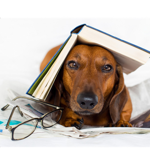 12 Phases of Going Back to School Starring the Family Dog